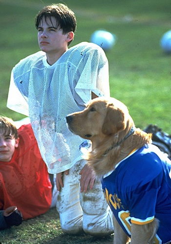 Picture for Air Bud: Golden Receiver