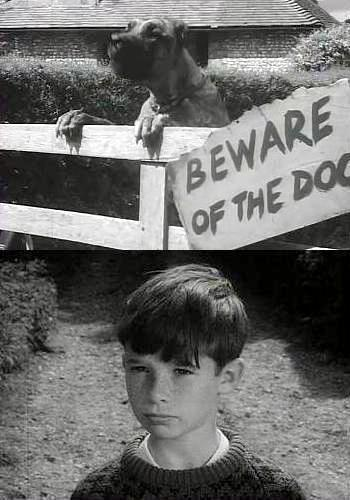 Picture for Beware of the Dog