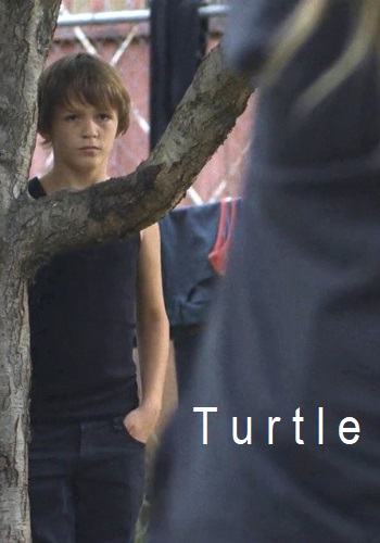 Picture for Turtle